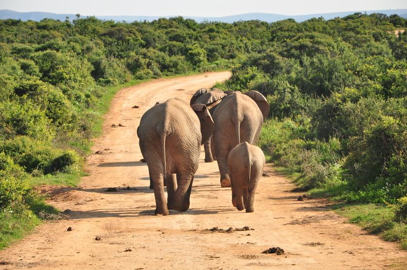 Así es cómo Moving Giants rescata elefantes haciéndolos viajar mil millas 4