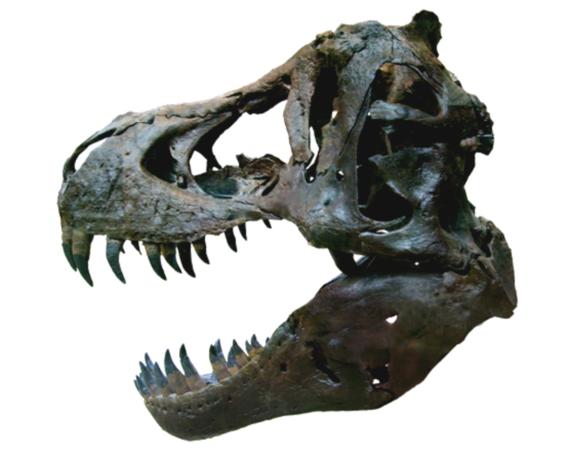 thanos simonatto dinoasaurio 3