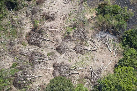 aumenta deforestacion de area amazonica en brasil 1