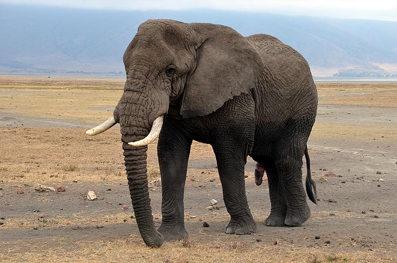 Así es cómo Moving Giants rescata elefantes haciéndolos viajar mil millas 1