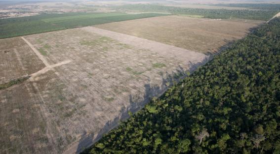 aumenta deforestacion de area amazonica en brasil 3