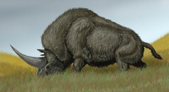 analizan el adn del unicornio rinoceronte siberiano por primera vez 1