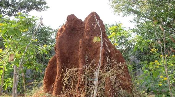 termitas construyeron una ciudad subterranea en brasil 1