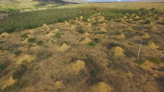 termitas construyeron una ciudad subterranea en brasil 3