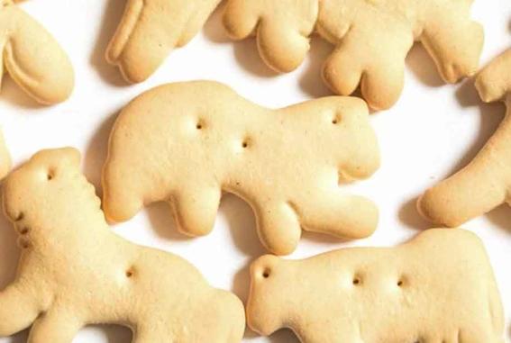 cientificos encuentran beneficios en las galletas de animalitos 2