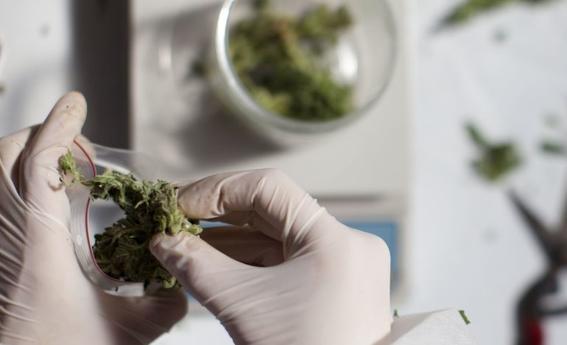 primera prueba para tratar cancer de cerebro con cannabis 2