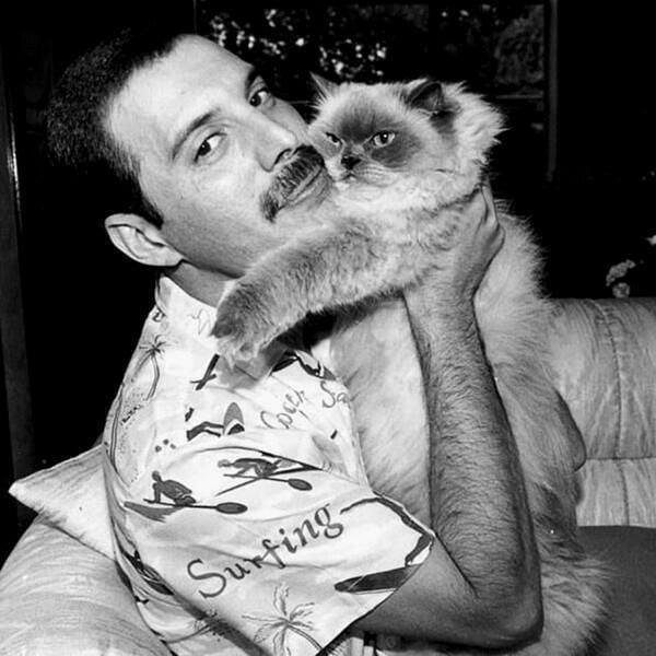50 fotografías de la evolución de Freddie Mercury 37