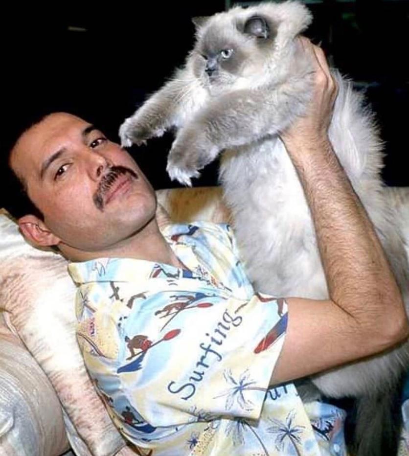50 fotografías de la evolución de Freddie Mercury 38