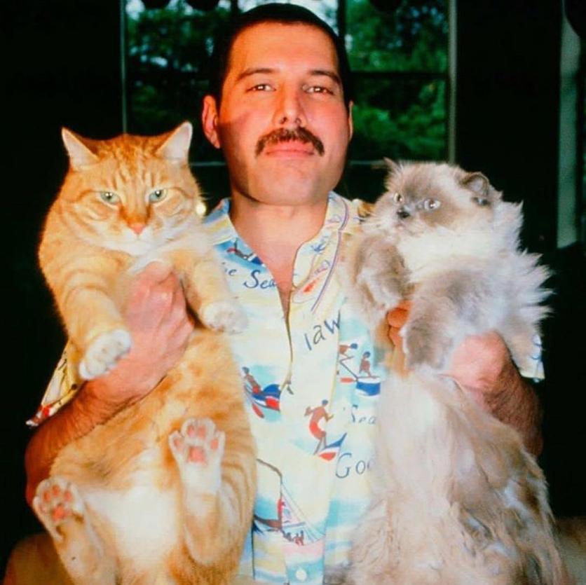 50 fotografías de la evolución de Freddie Mercury 39