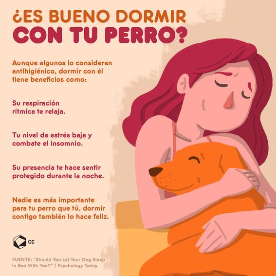 mujeres duermen mejor con perros que con hombres 2