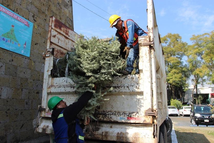 Esto puedes hacer con tu árbol natural después de Navidad 1