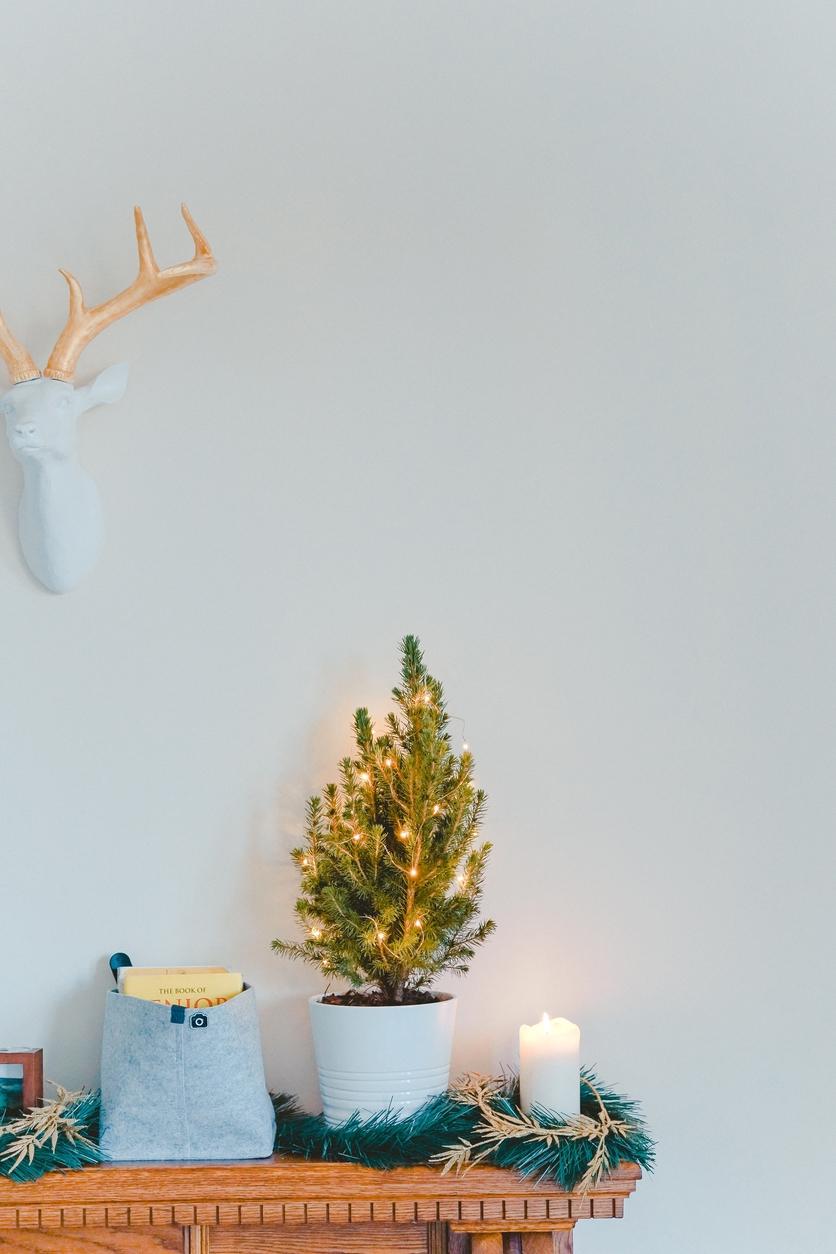 Esto puedes hacer con tu árbol natural después de Navidad 2