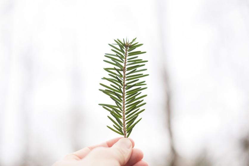 Esto puedes hacer con tu árbol natural después de Navidad 5