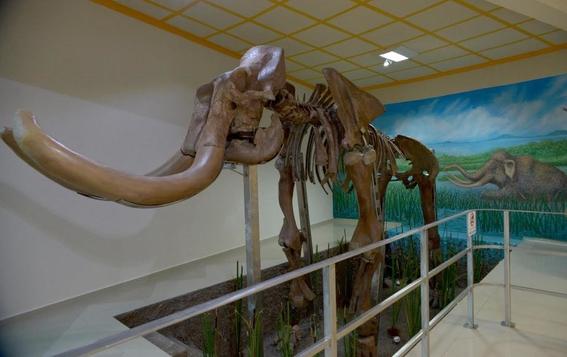 instalan de forma permanente el mamut de tultepec en el municipio 2
