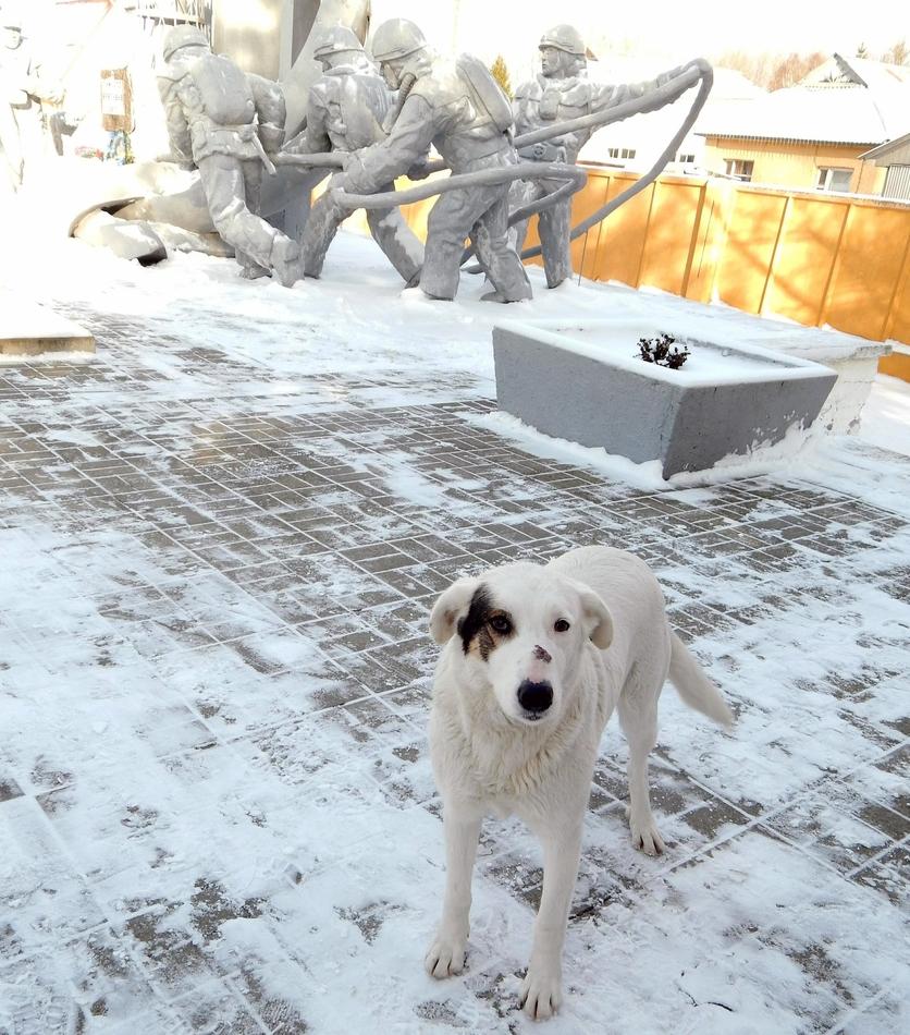 perros radioactivos mascotas de chernobyl