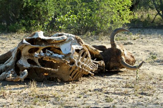 calentamiento global podria desencadenar efecto domino de extincion 1
