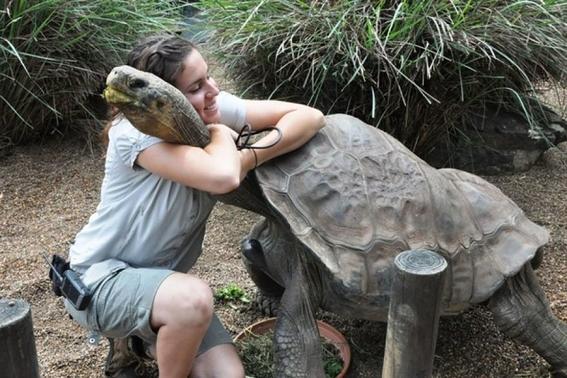 secuencia genetica del solitario george tortuga revela su longevidad 2