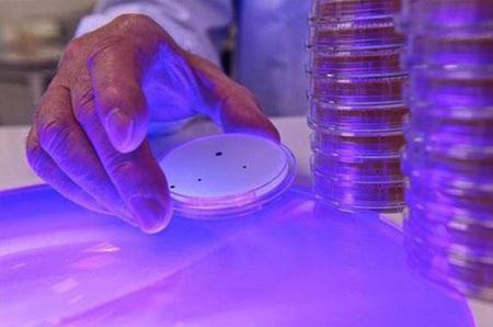celular tiene siete veces mas bacterias que el inodoro 3