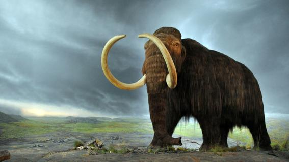 perro desentierra fosil de mamut de su patio 1
