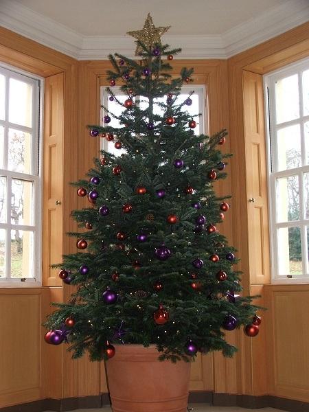 Rbol de navidad de pl stico natural rentado o - Arbol artificial de navidad ...