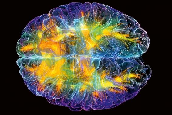 descubren ca2 zona hipocampo que determina comportamientos sociales 2