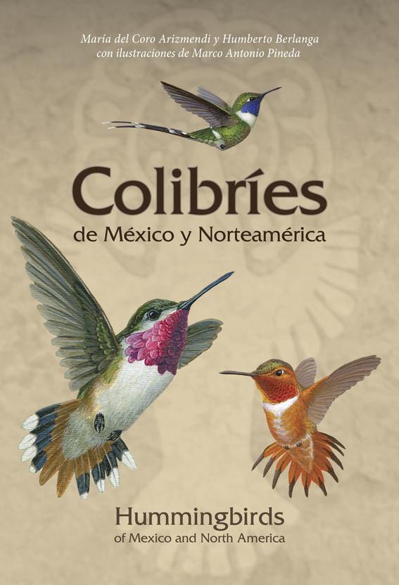 mexico promueve crear jardines urbanos para conservar el colibri 3
