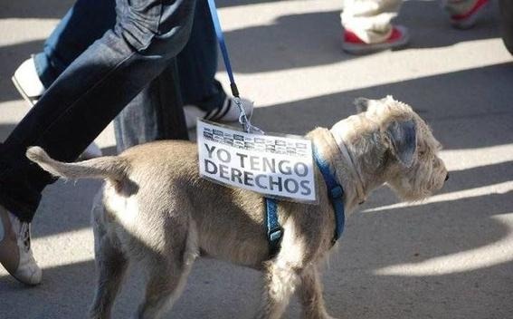 dia internacional de los derechos de los animales 2