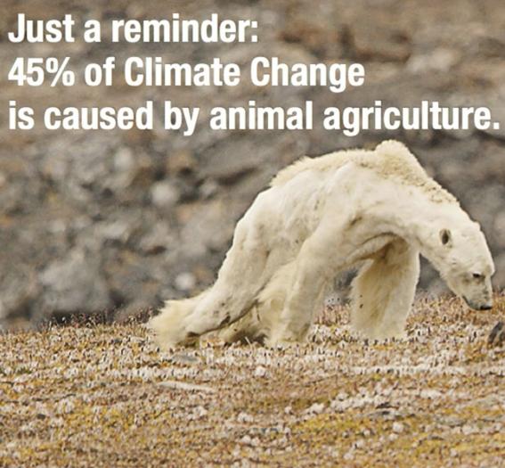 dia internacional de los derechos de los animales 4