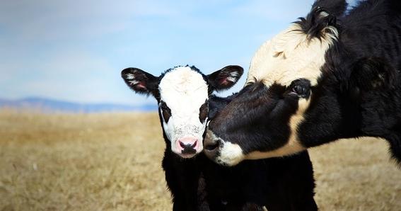 dia internacional de los derechos de los animales 1