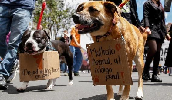 dia internacional de los derechos de los animales 3