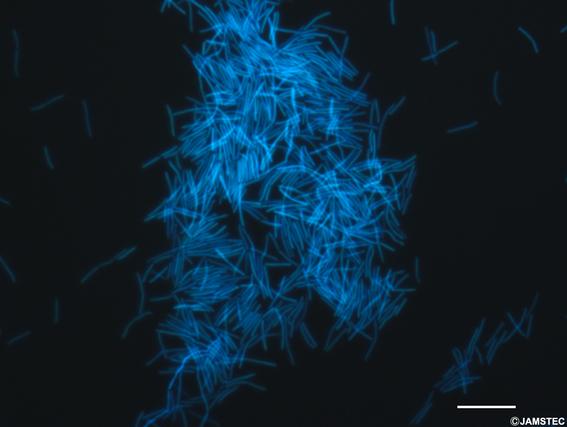encuentran ecosistema microorganismos kilometros debajo de la tierra 1
