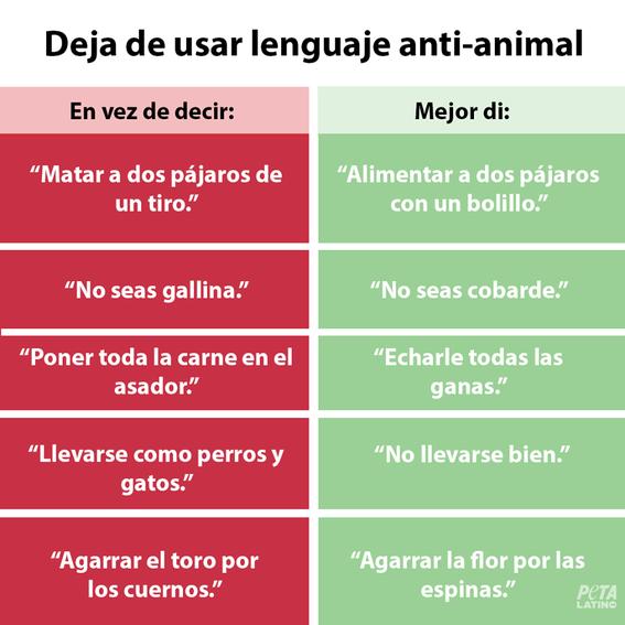 peta pide cambios en expresiones culturales para evitar crueldad animal 3