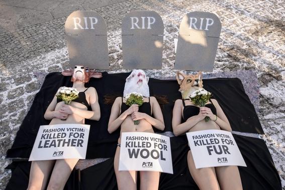 peta pide cambios en expresiones culturales para evitar crueldad animal 1