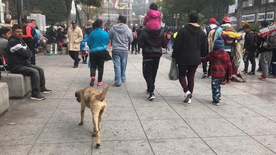 perros abandonados 1