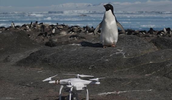 descubren colonia de millones de pinguinos oculta en la antartida 2