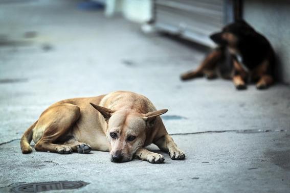 aprueban iniciativa matar perros que estorben y rompan bolsas 1