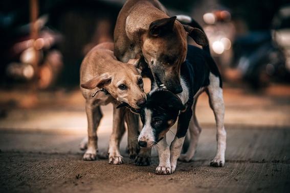 aprueban iniciativa matar perros que estorben y rompan bolsas 2