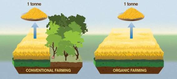 estudio determina que alimentos organicos son daninos para el clima 1