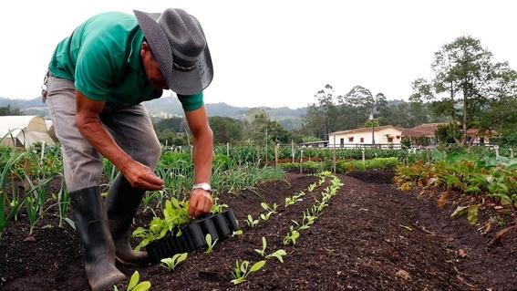 estudio determina que alimentos organicos son daninos para el clima 2