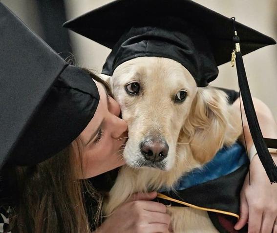 griffin perro que recibio diploma tras apoyar a su duena 2