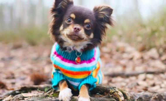 banar a los perros durante el invierno afecta su salud 2