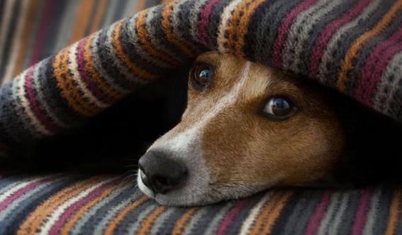 banar a los perros durante el invierno afecta su salud 3