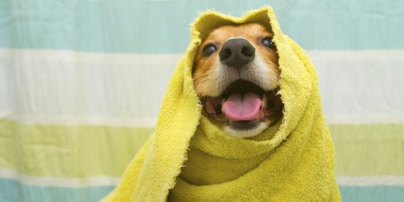 banar a los perros durante el invierno afecta su salud 1