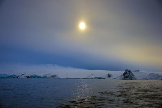 plaga de mosquitos midge invade la antartida y destruye el ecosistema 2