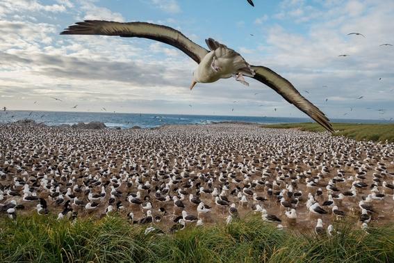 mejores fotografias del reino animal del 2018 de natgeo 2