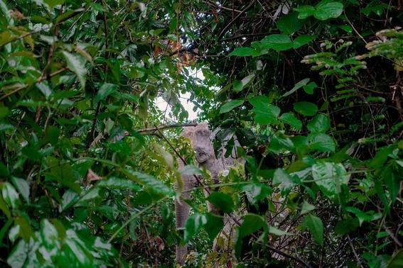 mejores fotografias del reino animal del 2018 de natgeo 6