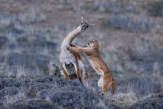 mejores fotografias del reino animal del 2018 de natgeo 8
