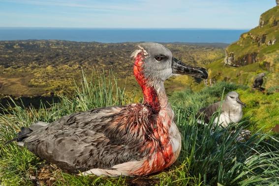 mejores fotografias del reino animal del 2018 de natgeo 13