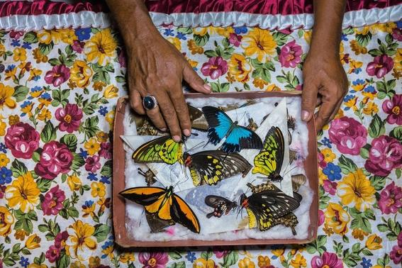 mejores fotografias del reino animal del 2018 de natgeo 15