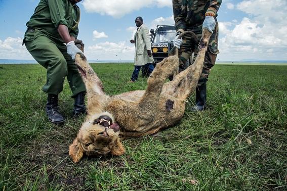 mejores fotografias del reino animal del 2018 de natgeo 17